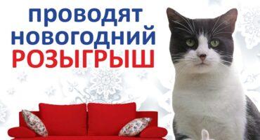 Розыгрыш в Калининграде